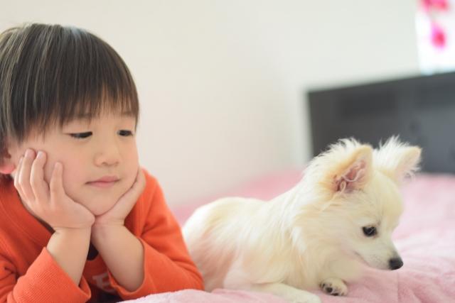 子供と子犬2