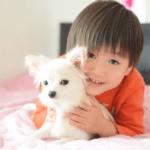 子供と子犬
