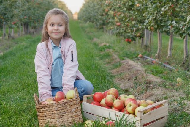 子供の農業体験